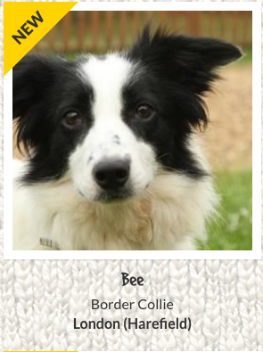 Bee the dog