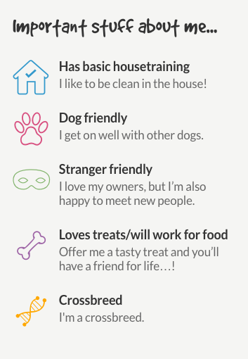 Information about a dog to be rehomed