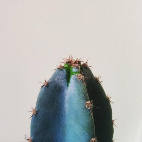 New cactus growth. #cheeky