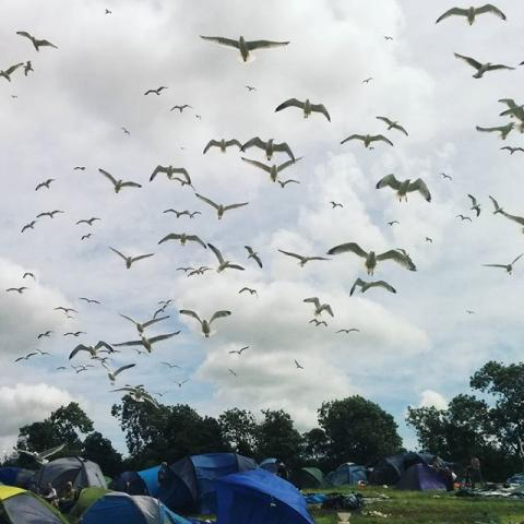 #latergram seagulls over #glastonbury