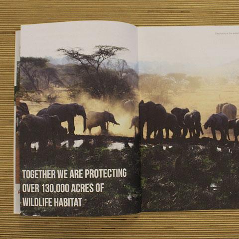 Camps International Charity Brochure Design